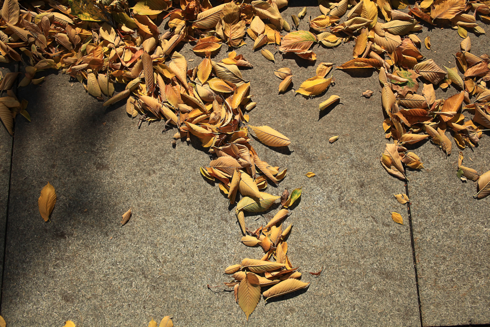 Autumn Concrete Lifting